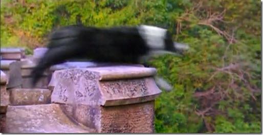 Cementerios naturales de animales ¿Mito o realidad? Perros-suicidas_thumb